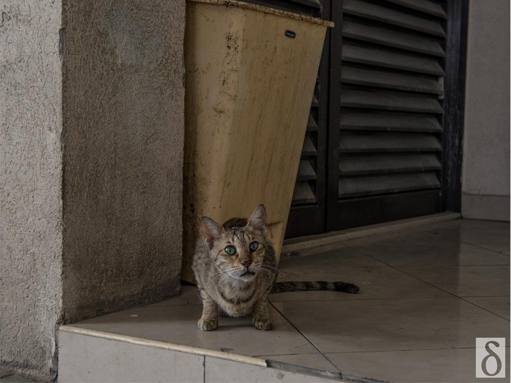 persian cat pooping everywhere