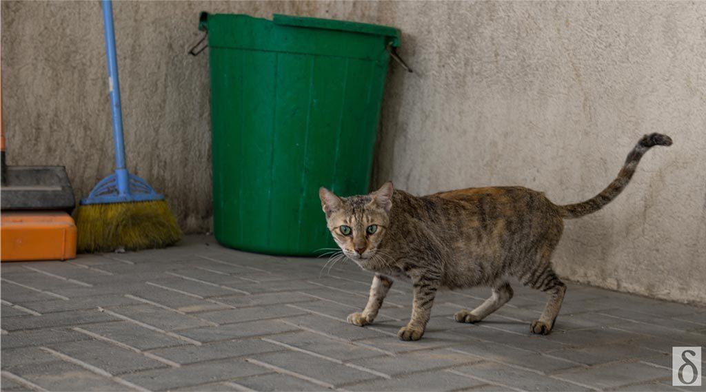 stray-cat-6
