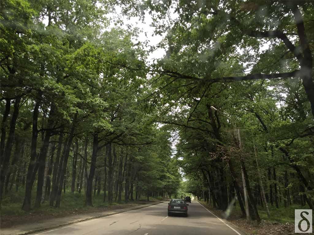 georgia-trees