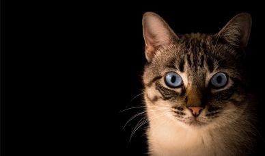 random-cat